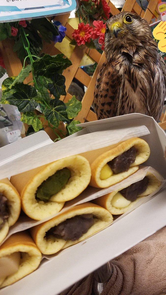 test ツイッターメディア - ペットショップちゃんLoveのEさんから大あんまきの差し入れ✨ 水浴び直後、びちゃびちゃなぺっちゃんと📷✨ 大あんまきおいちー🎶 お腹パンパンです!ご馳走様でーす(≧∇≦)✨ 色んな味が盛りだくさん🎶  本日も皆様ご来店ありがとうございました! #猛禽類 #ふくろうカフェ #わたどーる #わたど~る https://t.co/7AUuh9JIQj