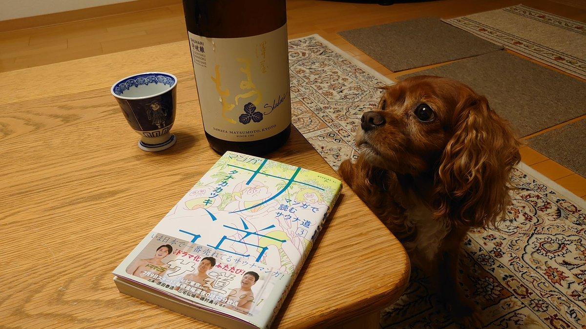 test ツイッターメディア - 在宅勤務を終え、週末買いそびれた[今週用の日本酒]を購入。  酒屋のスタッフさんに勧められ気に入った、京都の地酒・澤屋まつもと 守破離 五百万石 純米酒です  発売直後は品薄で入手出来ず、すっかり購入を忘れていた[サ道3巻]とともに、楽しませて頂こう。 #澤屋まつもと #守破離五百万石 #サ道 https://t.co/TlEIPA5ffO