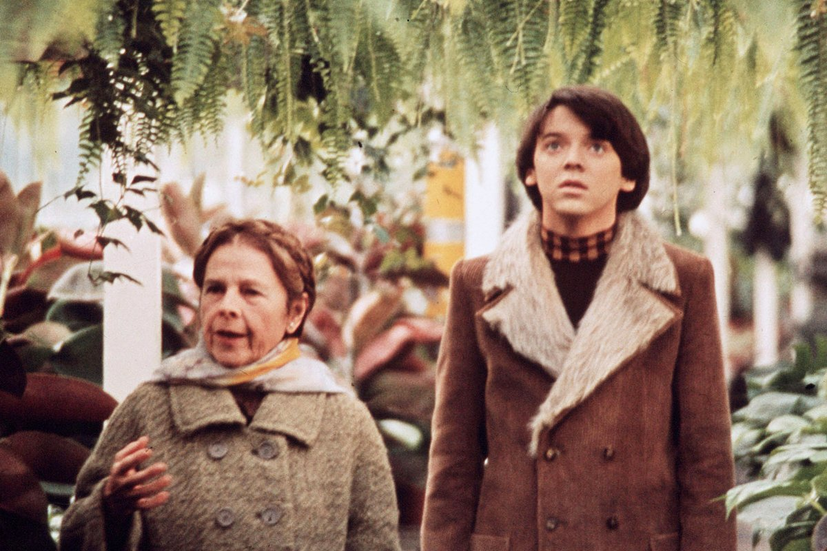 HAROLD AND MAUDE One of the greatest love stories of our time Hal Ashby's movie will open your mind https://t.co/QUEsFuAyHi