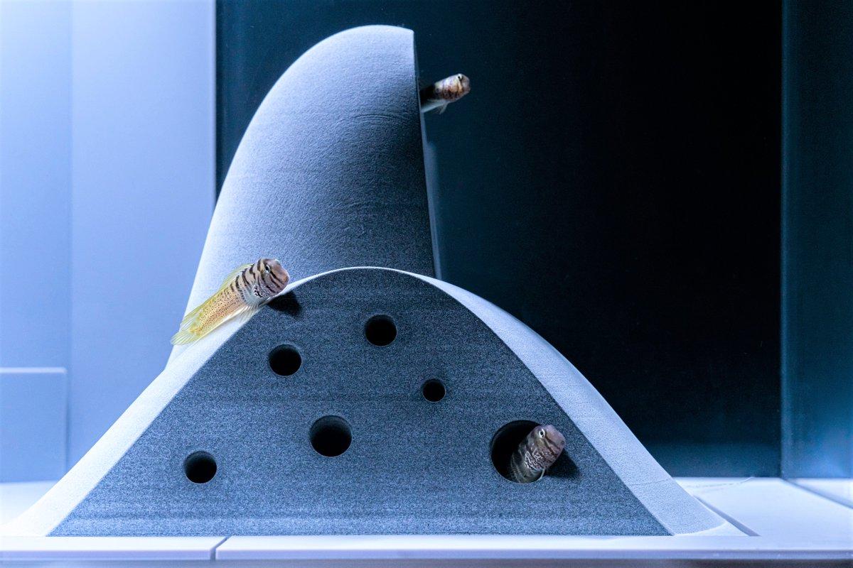 test ツイッターメディア - 【 明日31日から展示🚩】 すみだ水族館で開催していた企画展「カタチとくらし」が期間限定でお引越し!  小さないきものたちの「カタチ(姿)」の理由が分かる「くらし(棲み処)」の特徴をデザインで表現しています🛖🐟  ▼詳細はこちら https://t.co/ao4iUMbCcp https://t.co/FtHgvYzlL0