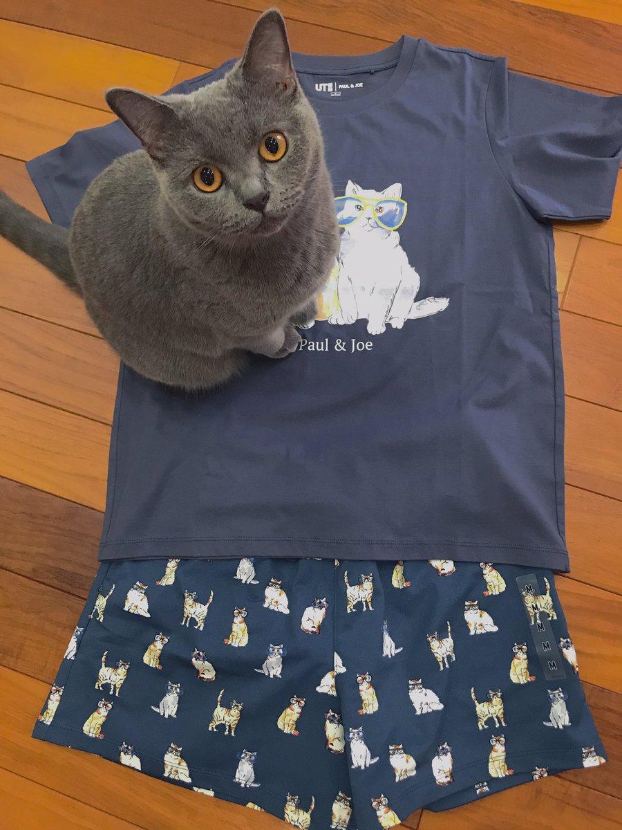 test ツイッターメディア - 可愛すぎて迷ったけど… 部屋着ならいいよね? Tシャツ間違えてL買っちゃった  #ユニクロ  #ポールアンドジョー  #猫好きさんと繋がりたい https://t.co/aqc56xywFG