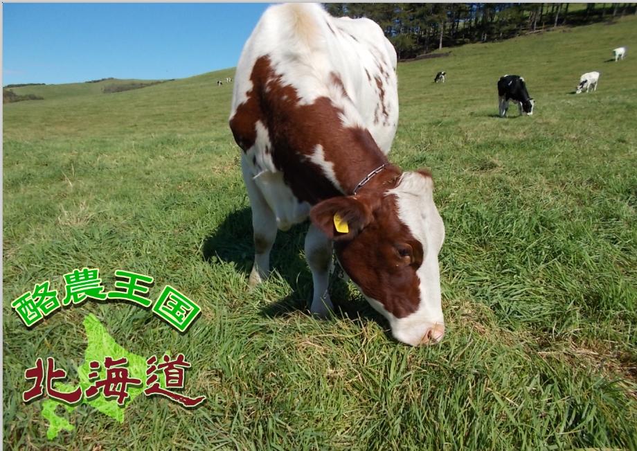 test ツイッターメディア - 北海道 中標津町 牛にも人にも負担をかけずにゆったりとした時間を過ごしながら仕事をしています。 自然に囲まれ、動物達と一緒に働いてくれるスタッフを募集しています。 お問合せください。 https://t.co/TkN2gpxEcm https://t.co/Hd0feQaNBD