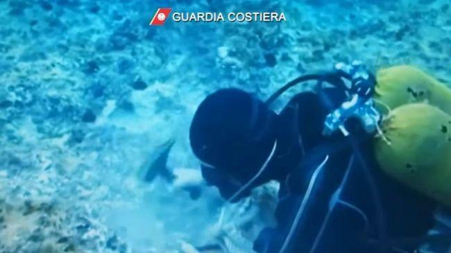 test Twitter Media - #Cronaca #Castellammare - Datterai arrestati, il WWF: «Fenomeno diffuso e radicato» LEGGI LA NEWS: https://t.co/omS7ZA6WId https://t.co/cp0FrFjLSF