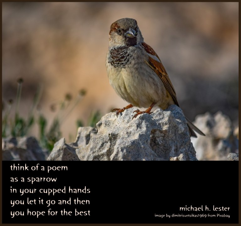 #tanka #kyoka #haiku #senryu #haiga #micropoetry #poetry  think of a poem as a sparrow in your cupped hands you let it go and then you hope for the best https://t.co/jIbI9OWJ31