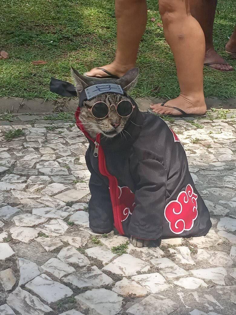 RT @fezani: foda que ela linda e eu sou apenas gato aCATsuki https://t.co/z74tLhnaig