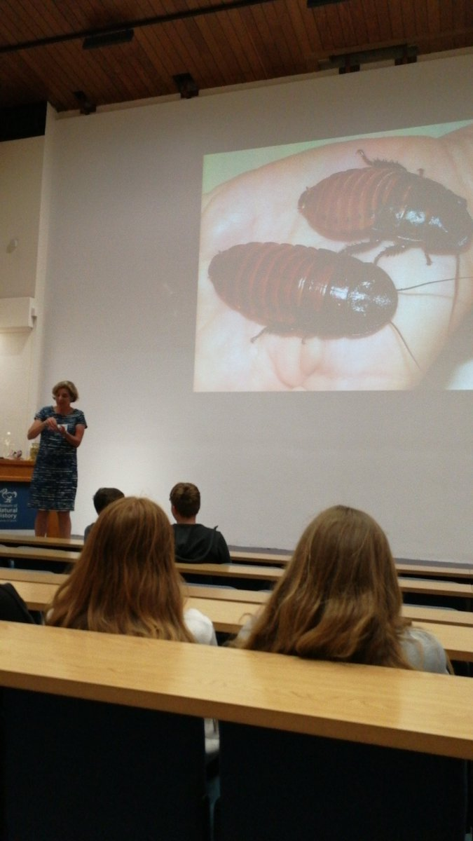 test Twitter Media - A fantastic lecture on the theory of evolution using Madagascan Hissing Cockroaches...... https://t.co/aLvBsD3MZb