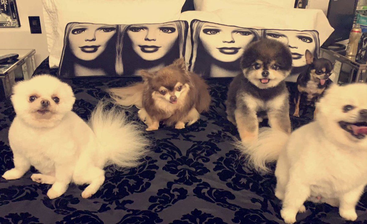Movie night with my #HiltonPets ???????????????????????????????????? https://t.co/PnUZ0QLyWg