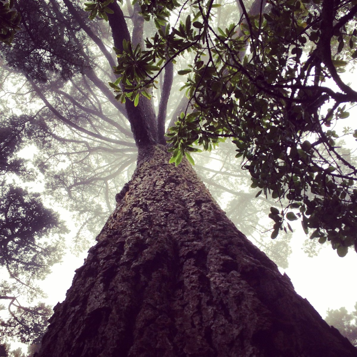 Post an interesting photo of a tree. Like the example below.  Show it to me here: https://t.co/hSuWTs3JUv https://t.co/LkshOr80Yk
