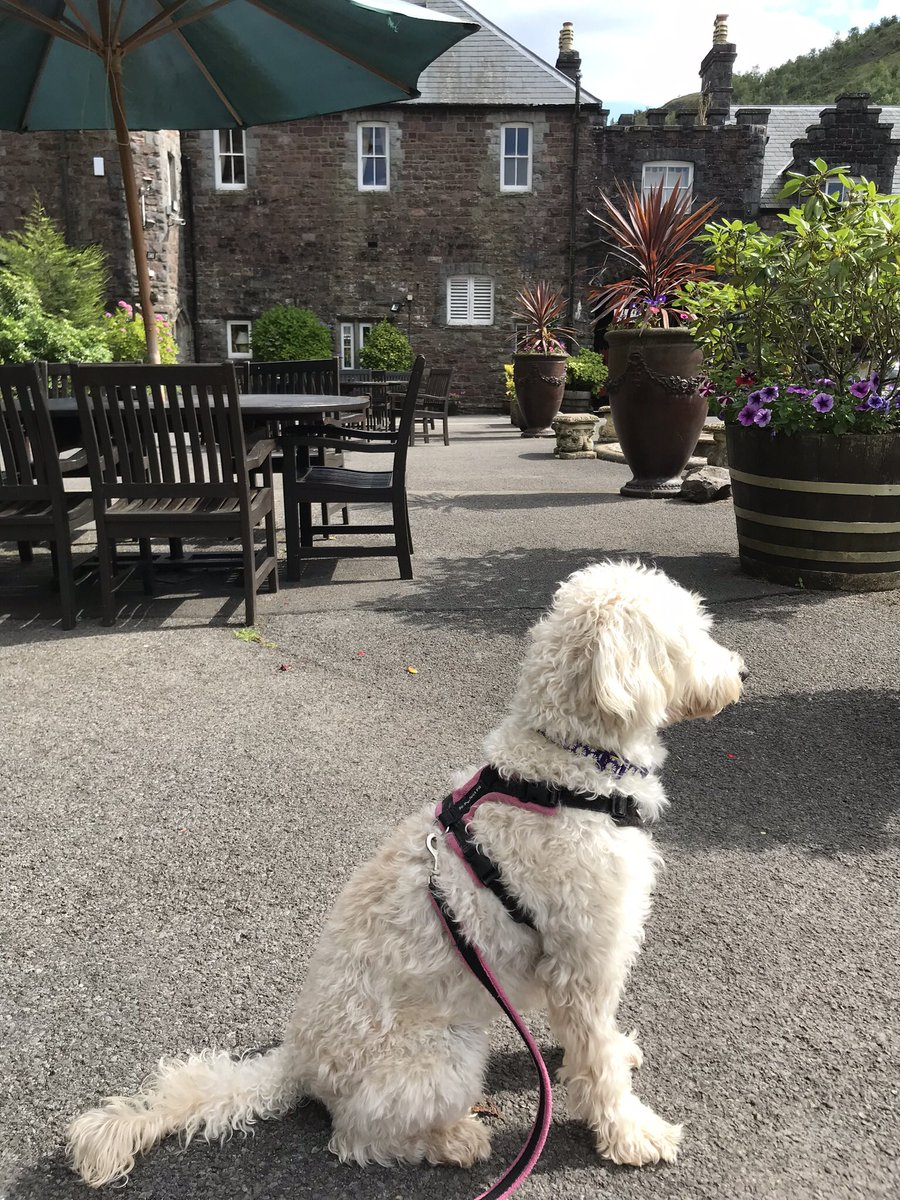 test Twitter Media - Daisy is enjoying her holiday in Wales @craigynoscastle @willowsvets https://t.co/p0SUReEzej