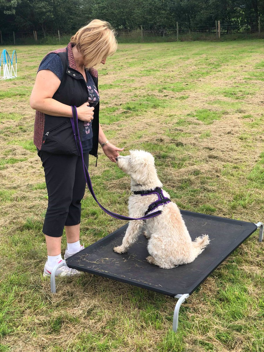 test Twitter Media - Great training session today - 'Building Bonds'. Lots of experiences for our dogs. Agility, different surfaces, wobbly surfaces, all to build confidence and relationships.  Always fun and challenging.@Myhappydoguk https://t.co/Dub4oPrzPF