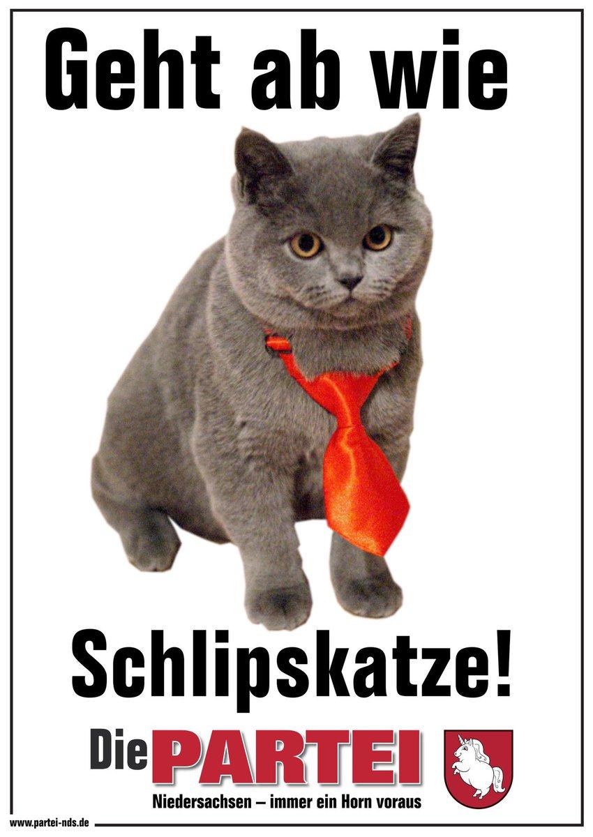 RT @PARTEI_Hannover: Die PARTEI wünscht alles Gute zum #Weltkatzentag #InternationalCatDay https://t.co/vtSGF0xYLX