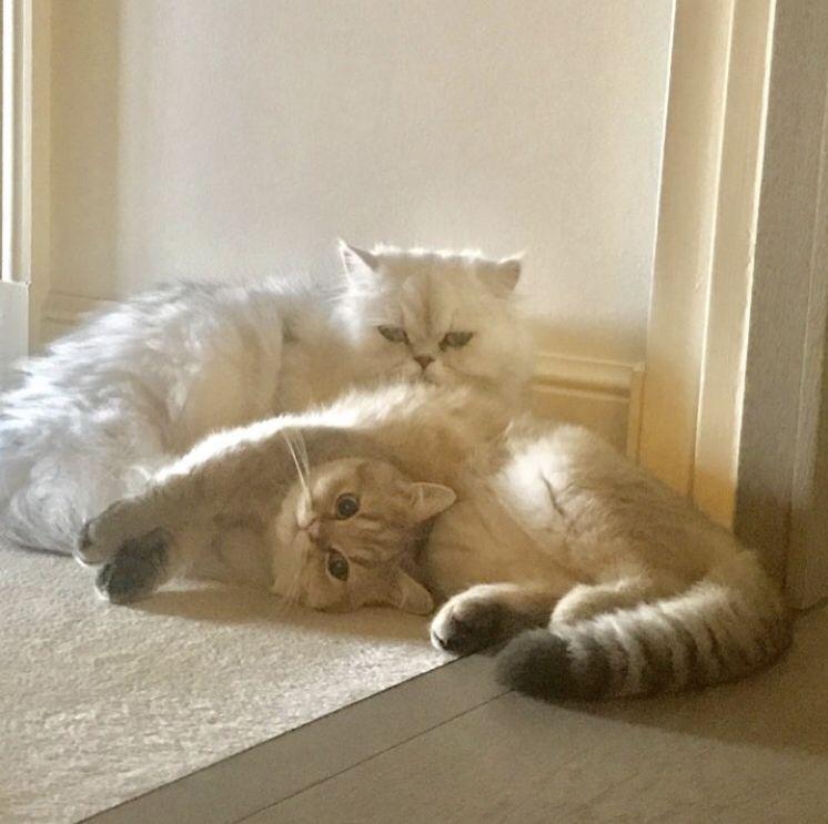 test ツイッターメディア - 8月8日は「世界猫の日」🐈🐾🐾 #猫 を愛する世界中すべての人に愛を込めて・・ 2019 Autumn Collectionにはヌネット&ジプシーの可愛い限定デザインが😻💕💕 詳細はこちら▷▷https://t.co/n1OsBYlLEk #WorldCatDay #世界猫の日 #ポールアンドジョー https://t.co/1sGnRk9wCv