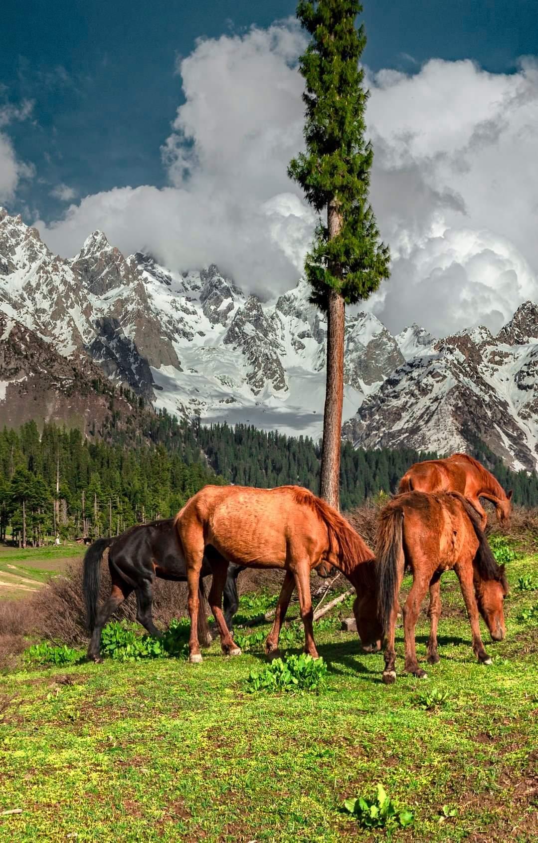 Jag Banal - Mankial in the Back - Swat Valley - https://t.co/EabH3uV3eC