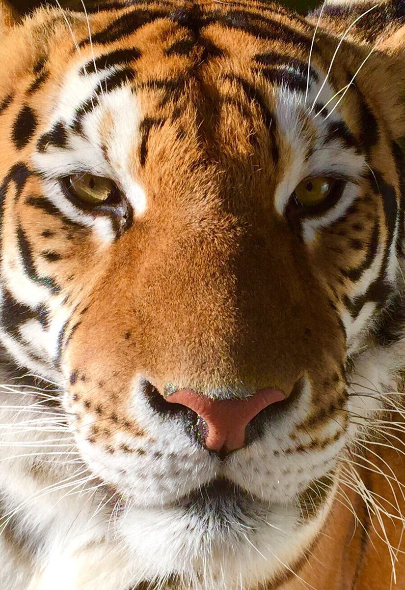 test Twitter Media - @LincolnshireWi1 We've had the pleasure of filming here many times, these bengals are truly beautiful, a must see experience @ParrotZoo https://t.co/V7N9yhsVtE