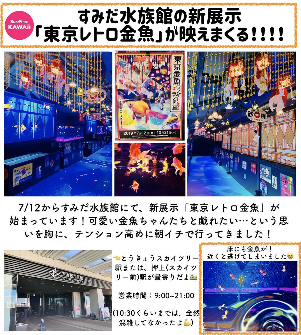 test ツイッターメディア - 幻想的な金魚の世界へ♡すみだ水族館の新展示「東京レトロ金魚」が最高すぎました! https://t.co/LeIuUOaVER