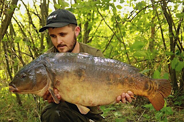 Another old sought after carp from the park, the mega 'Tea & biscuits' @DynamiteBaits @espca