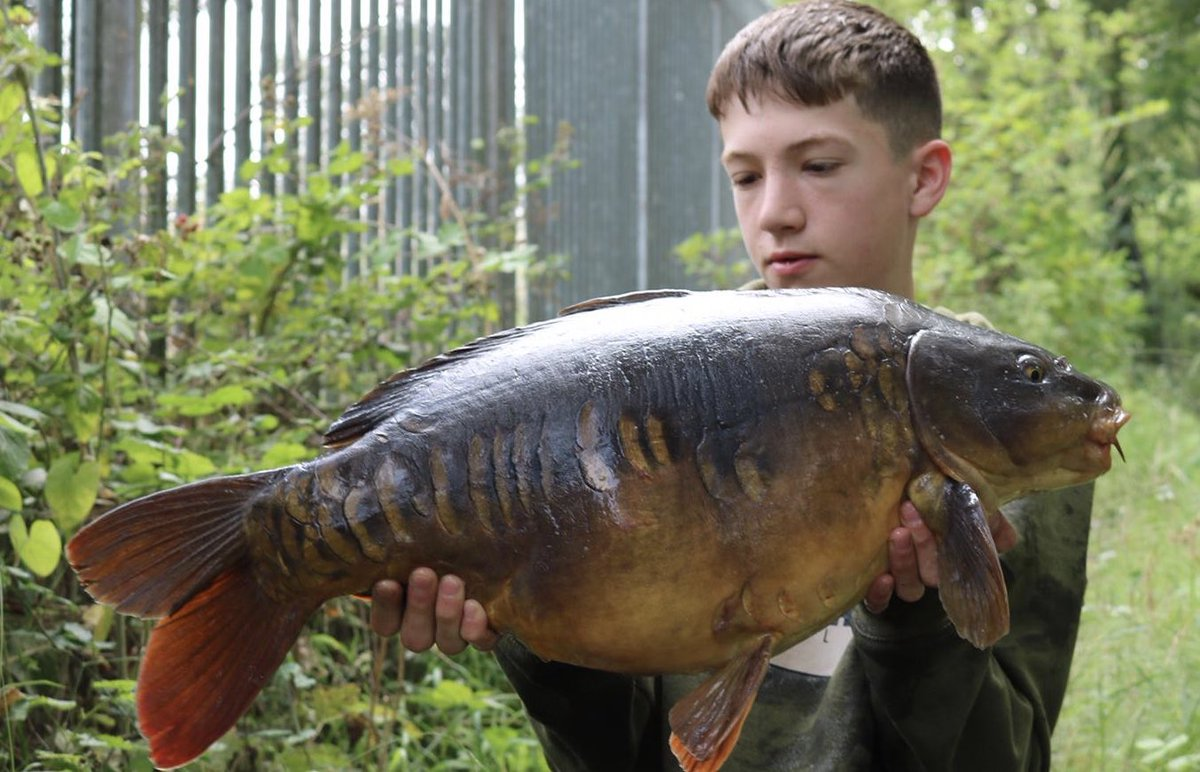 Cracking little Dinton for Charlie Court. These really are <b>Beautiful</b> carp #dintons #carpfishi