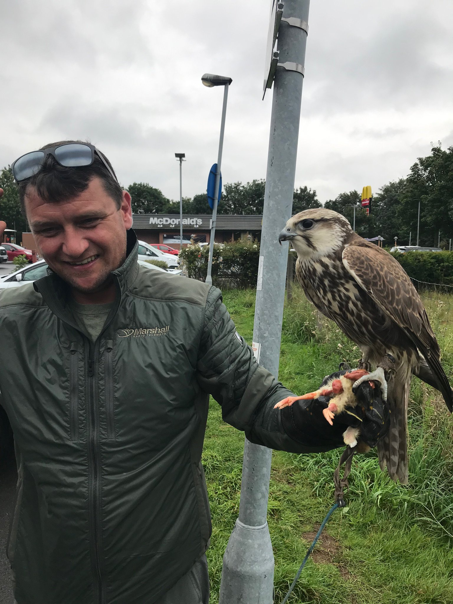 This Seika Falcon went missing from Cheshire on the 6th August and went on quite the adventure, turning up in Tyne & Wear on the 14th! Luckily ACO Dawson was able to trace his owner who drove straight up north to be reunited with his bird! Please microchip your animals! 51 🐦 https://t.co/nRKF6S2sSa