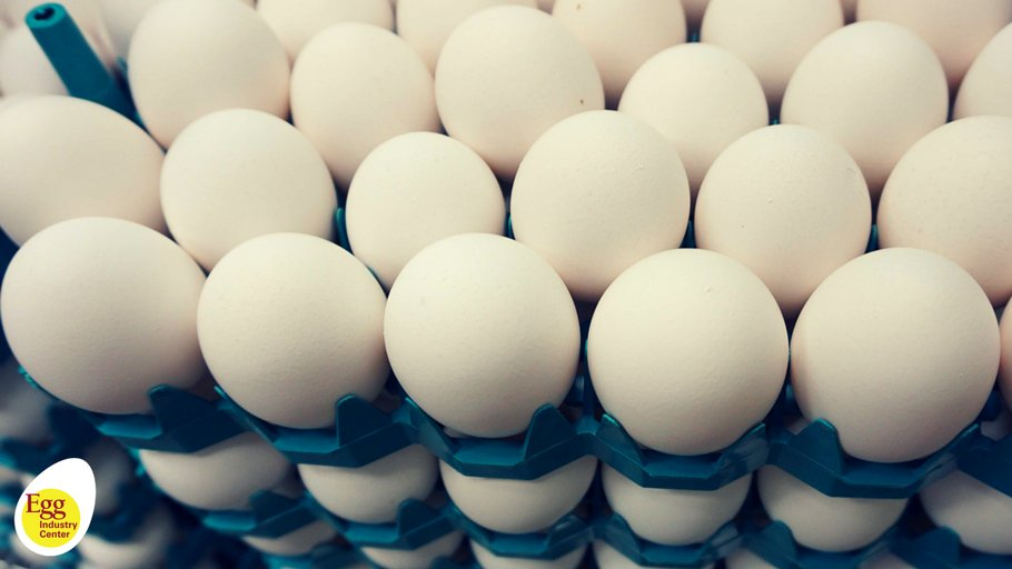 RT @EggIndustryCntr: #FunFactFriday DYK One Egg a Day could Keep Dementia Away? Read more https://t.co/7dg3M7m45f https://t.co/ZD8LKZ4dBh