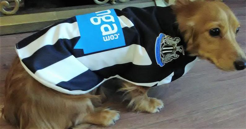 Here are some Toon dogs for my #NUFC fam. We need this.  #HowayTheLads https://t.co/TD2Utdl9lP