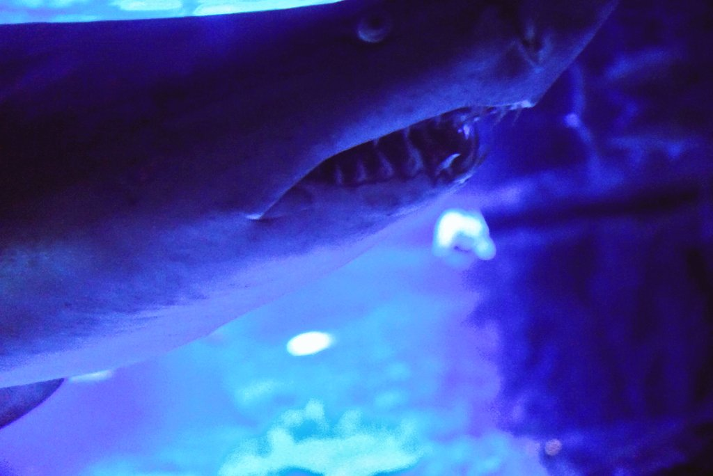 test ツイッターメディア - 先日のすみだ水族館での写真(魚とか) 水族館て楽しいね~(*´ω`*) サメが間近にきて中々の迫力でした。 #ファインダー越しの私の世界  #写真好きな人と繫がりたい  #photography https://t.co/dYn6YzJJWd