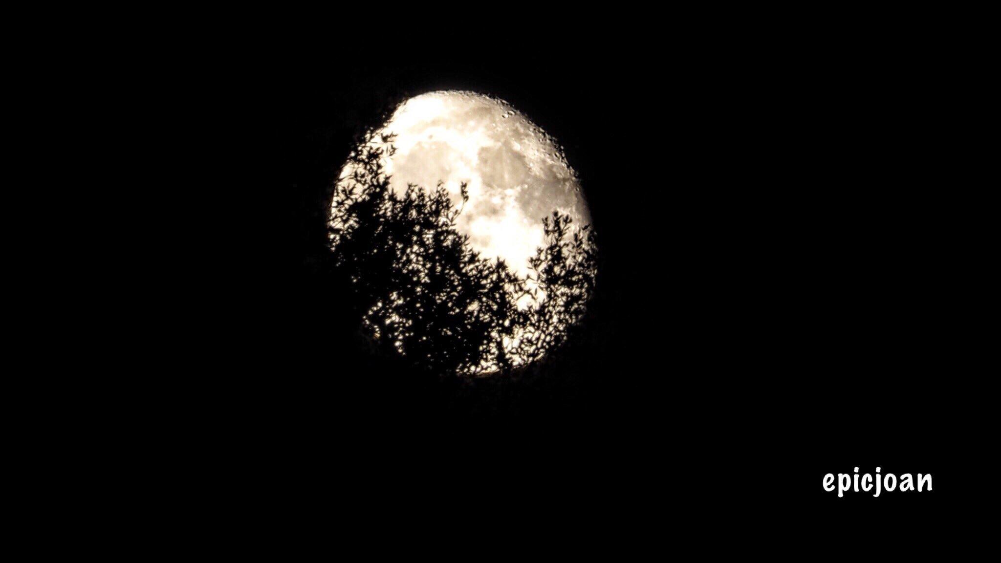 RT @epicjoan1: ahir a la nit,sortida de la lluna entre arbres i barrejant-se en els núvols @SoniaPapell @AASCV @OlympusUK @esolympus @Monica_Usart @MeteoAdM @AlfredRPico @BCNmeteo @BonaSerrat @SergiLoras @estelsiplanetes @El_Universo_Hoy #cielosESA @PepJordana https://t.co/Z9Uw8EHAiW