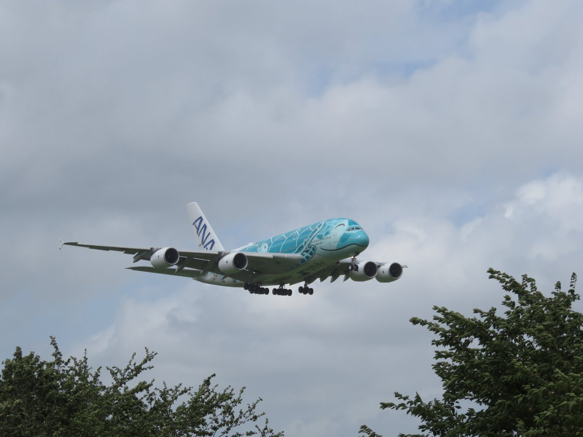 test ツイッターメディア - 2019/8/15 ついにホヌとの対面が実現!いや~ニコニコしてるデザインが実に可愛い(´∀`*)そして何よりデカい!本当に存在感がある!これはカイだけど今度はラニも見たい! #ANA #FLYINGHONU #A380 #成田空港  #フライングホヌ https://t.co/tjY32rJExc