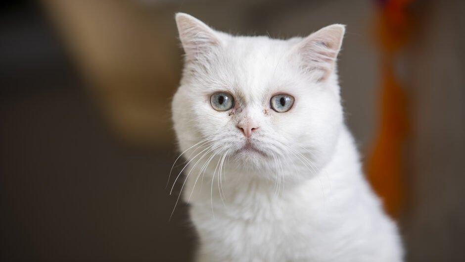 test Twitter Media - Flere katte end nogensinde før havner på internat https://t.co/FtjAisVzG3 https://t.co/Uk8KHY2yWP