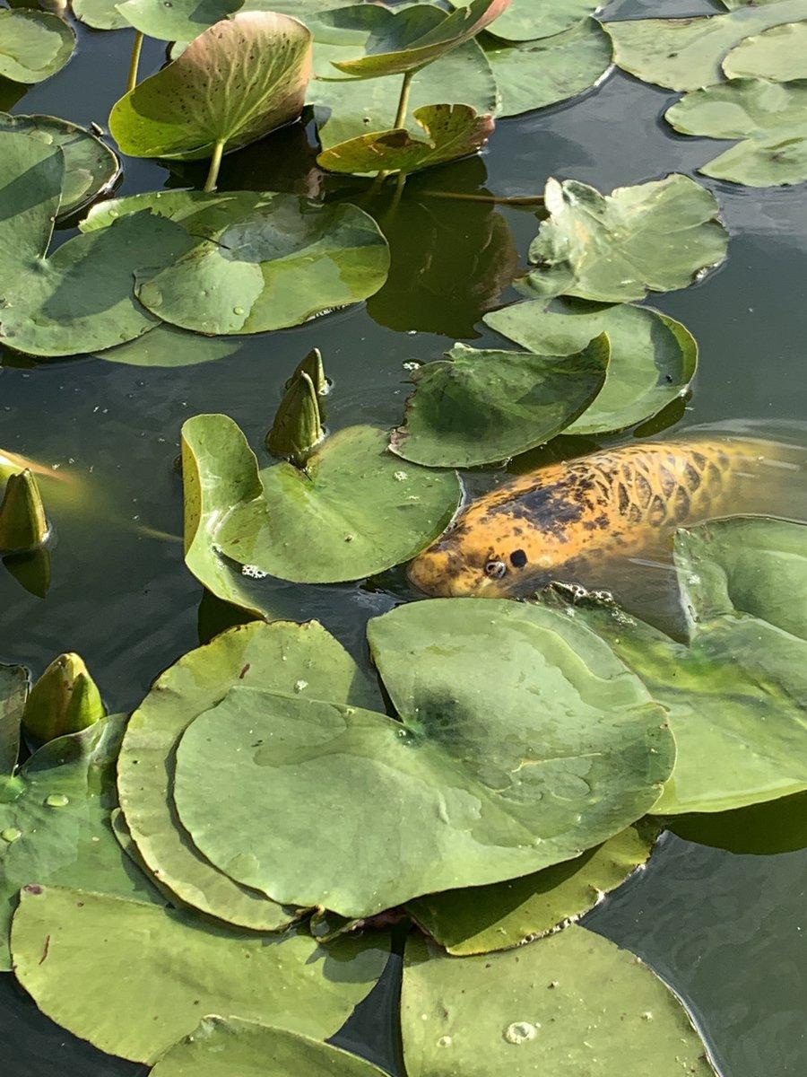 I see you 👀 #carp #koi #carpfishing #fishing #carpfishinguk #peaky<b>Carpe</b>rz @the_peaky_<b>Ca