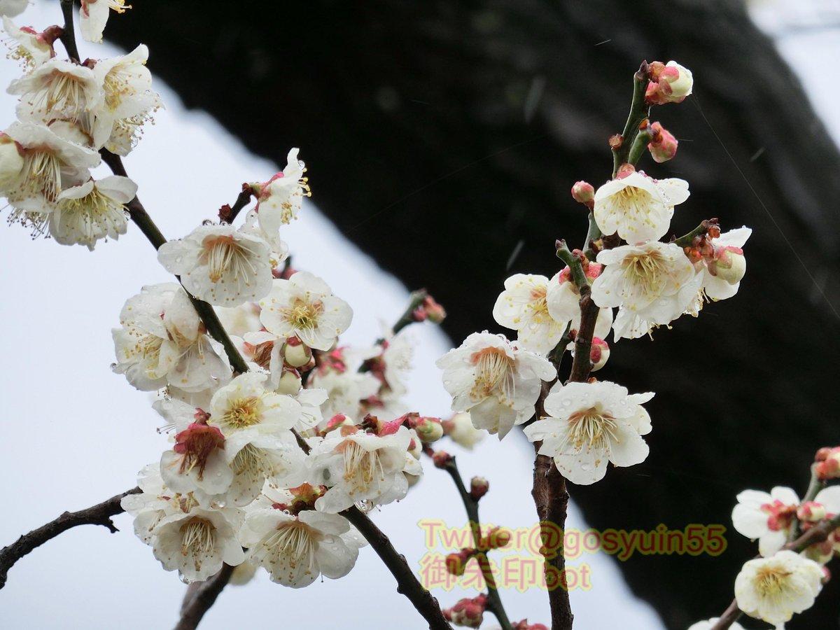 test ツイッターメディア - 茨城県水戸市鎮座『常磐神社』と摂社『東湖神社』の御朱印。偕楽園等で行われる「水戸の梅まつり」期間中は御朱印に特別な印や、春告守等が頒布。期間中、有名な名所なので混雑に注意が必要だが、その季節、梅が好きな人には最高の場所だ。 https://t.co/rP2DPHK8D2