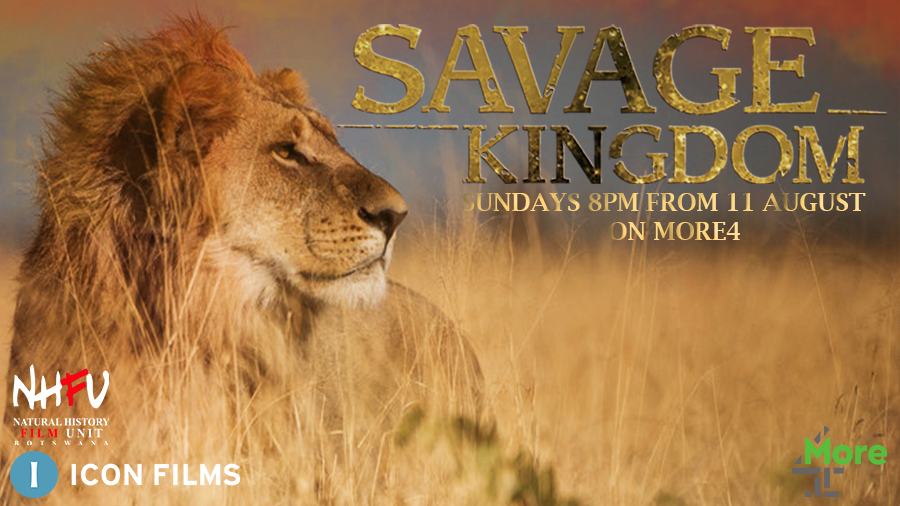 Drama, conflict, Emmy-nominated narration - lions. #SavageKingdom has it all. Don't miss it tonight at 8pm on More4 https://t.co/DkmcLh7KT8