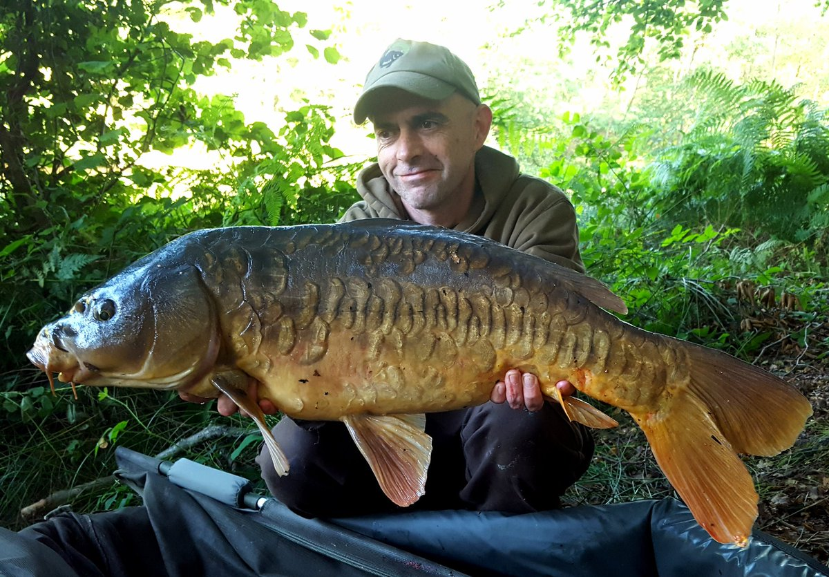Beautiful 16lb leney caught over a bed of 10-15mm meatymite https://t.co/7i9ET7m5hR #carpfishing #ba