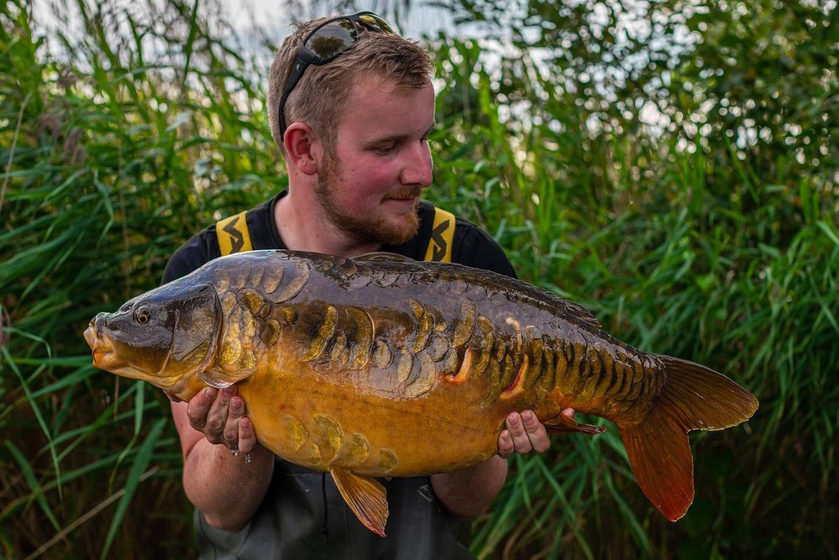 Stunning little Scaley for Lewis Porter 👌🏻🎣  @TheCARPbible   #Carp #Carpy #CarpFishing #Fis