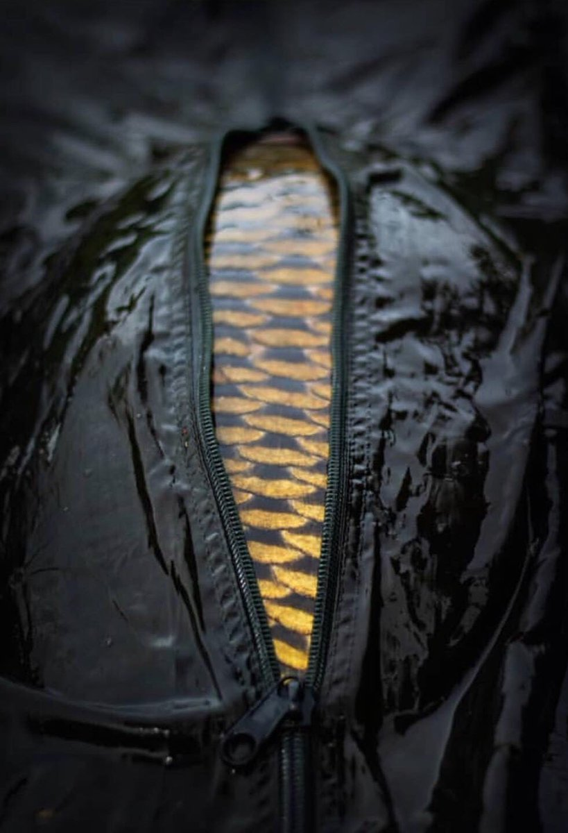Bag of Gold 🔱  📸 alessandro_sempre <b>👈🏻</b> Instagram @alien_carp <b>👈🏻</b> @TheC