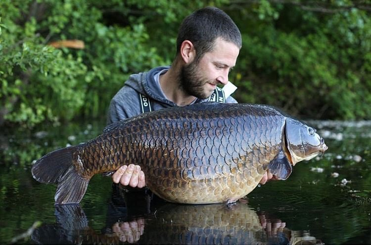 Stunning Common for Elliott Gray 💪🏻🎣   @TheCARPbible  #Carp #CarpFishing #Fishing #Carpy ht
