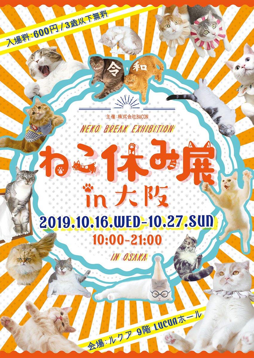 test ツイッターメディア - 10月16日(水)から始まる「ねこ休み展」のお知らせです。 今度の会場は大阪ルクア9階の催事場です。今回は青彩が大阪に初登場。 青彩の新作フォトブックも用意して、皆さまのご来場をお待ちしてます。 #ねこ休み展 #猫 #ねこ #blueeyes https://t.co/90u6LoP9ER