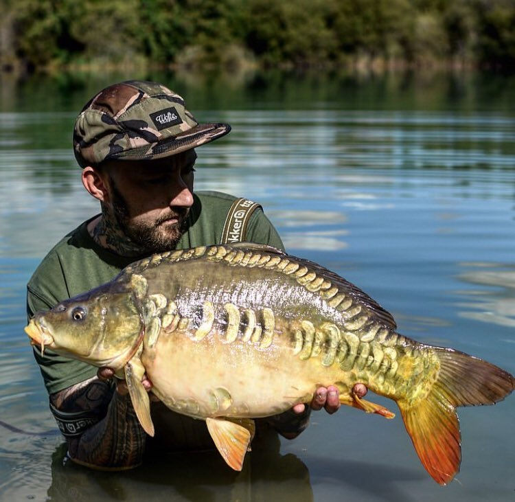 BIG SHOUT to Bobby ud83dudcaaud83cudffbud83cudfa3 Stunning fish <b>Stunning</b> photographer  @TheCA