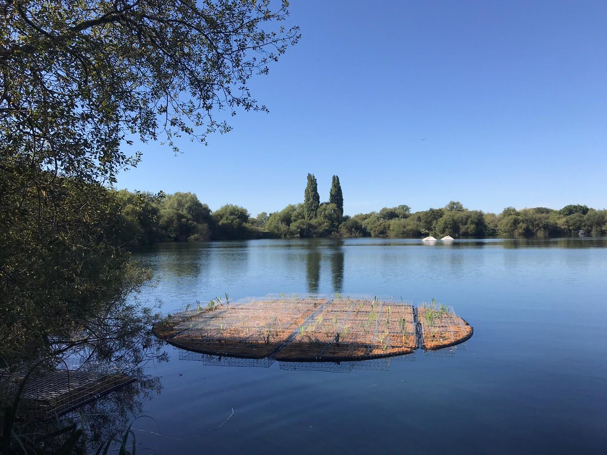 Floating reed bed installed this week in #Wraysbury #carpfishing #<b>Carpe</b>r https://t.co/bJej5yj