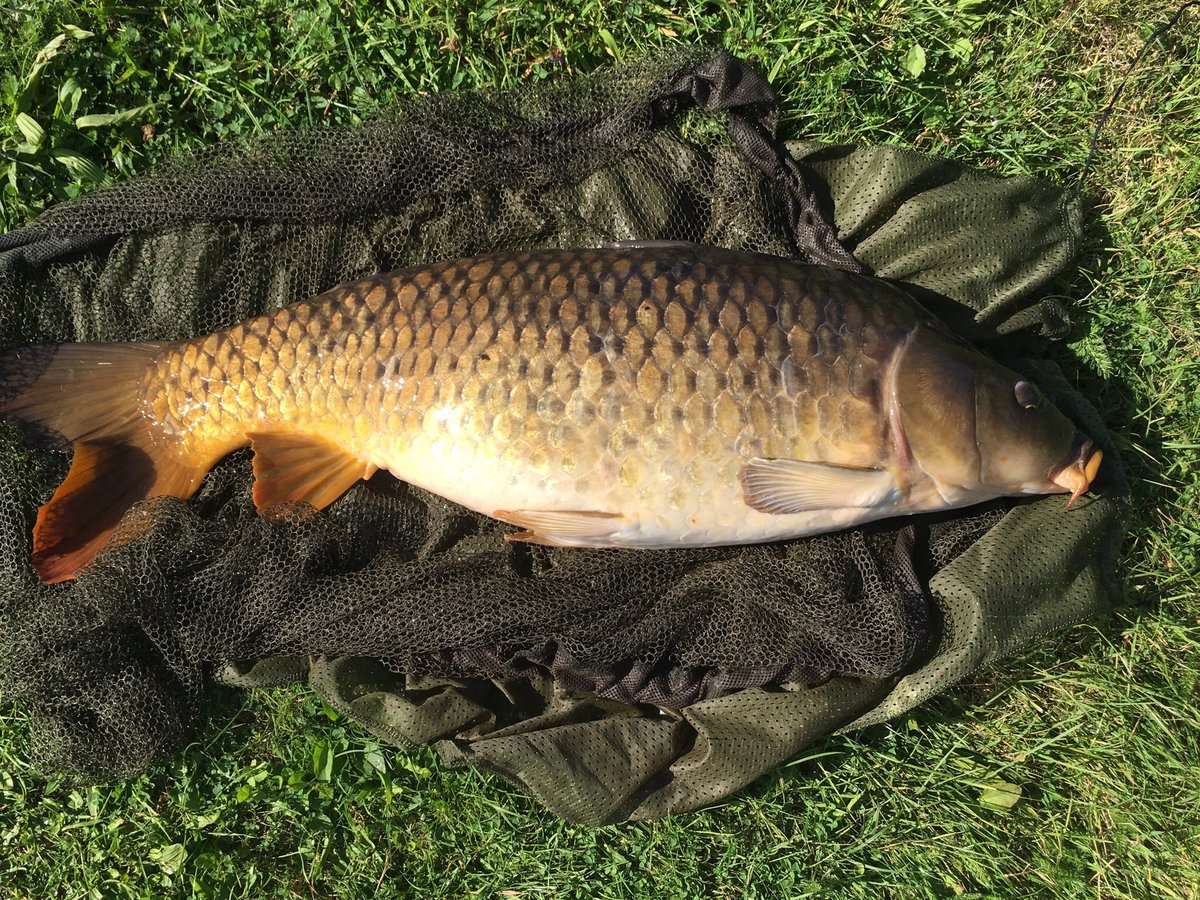 Just <b>Catch</b> a nice carp of 13kg. So happy. 😀🐟🎣#carp #carpfishing #<b>Catch</b> #happy
