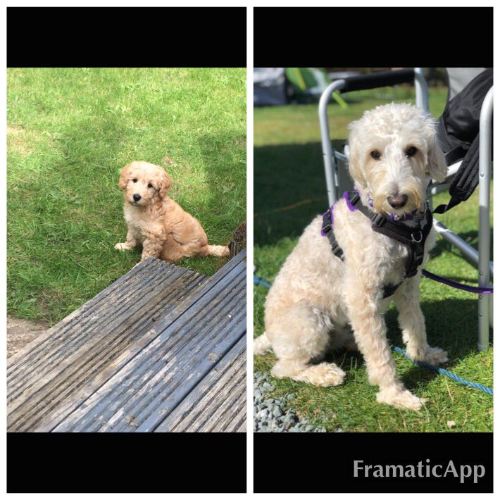 test Twitter Media - GOTCHA DAY- 3 years ago today we picked up Daisy. We couldn't be without her now at Hollywood. @willowsvets @Myhappydoguk https://t.co/rxeQLQRLQe