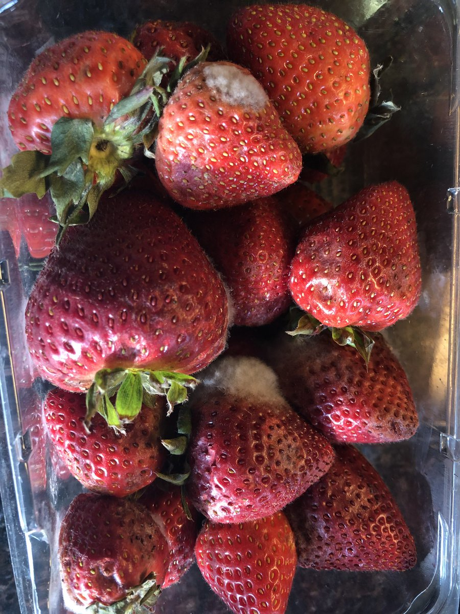 test Twitter Media - So disappointing #kroger #clicklist The produce has been gradually getting worse but this week after 2 days my avocados, watermelon, and strawberries are all bad. What a waste of time and money. @kroger @krogerco https://t.co/7tRayX5GMr