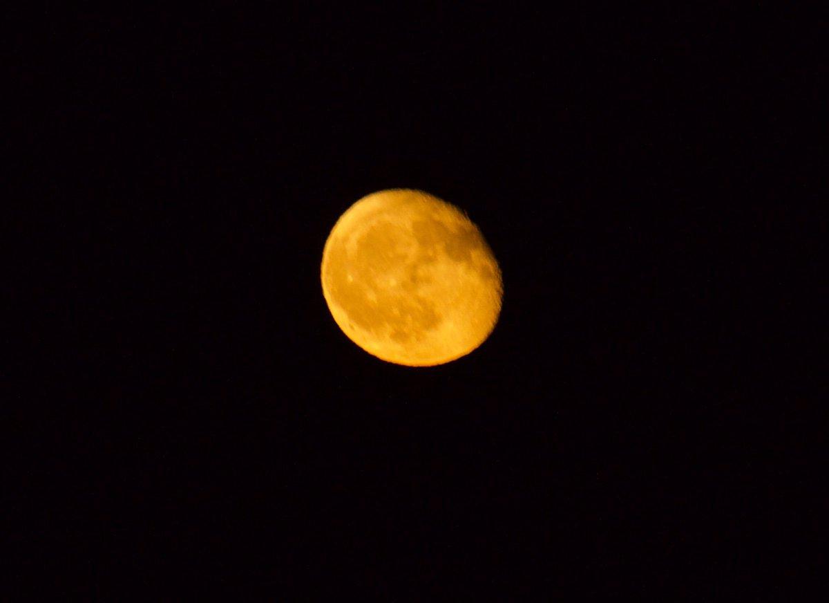 test ツイッターメディア - 9/17/ 寝待月 19:42/ 月齢  18.0  月の出( 19:29 )まもなく 赤みが強くなっている  #同じ月を見ている  9/22  下弦 9/26  二十六夜 ( 逆三日月 ) 9/29  新月  20日は彼岸の入り 「暑さ寒さも彼岸まで」 山も里も色づく候です  今日もありがとうございました またよろしくお願いします🍀*゜ https://t.co/AyawPsk2Mm