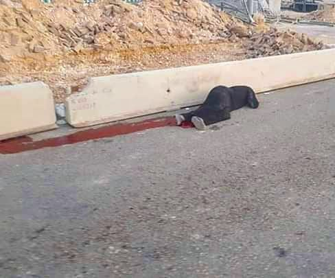 The red on that road is blood.  Israel shot this 50 year old woman today. Then they let her bleed to death. On that road.  My heart! 💔  #Palestine #Qalandiya https://t.co/1p2TRnA2h3