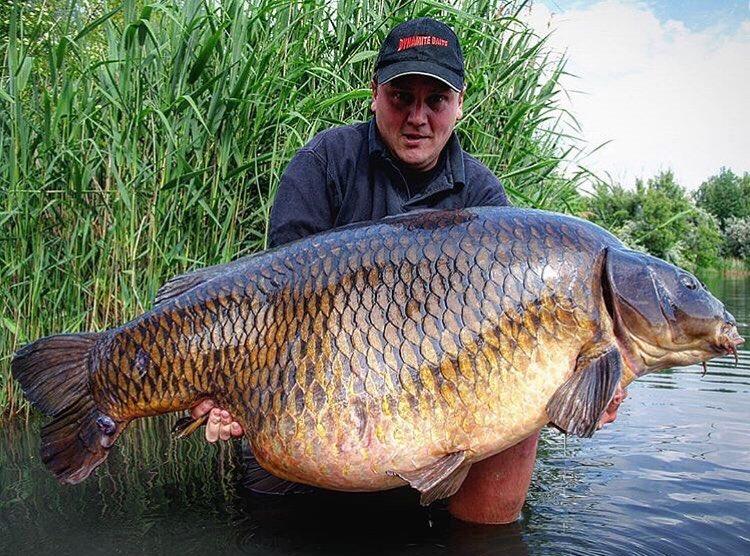 Absolute <b>Stunning</b> catch!! Well done Nermin Caro 💪🏻🎣 @TheCARPbible  #Carp #CarpFishin