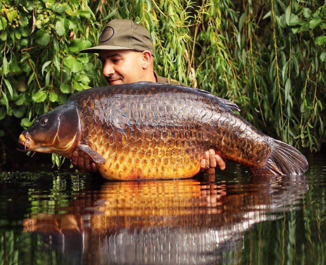 BIG SHOUT to Jon Gill 💪🏻🎣 What a <b>Stunning</b> Common that is!!  @TheCARPbible   #Carp #C
