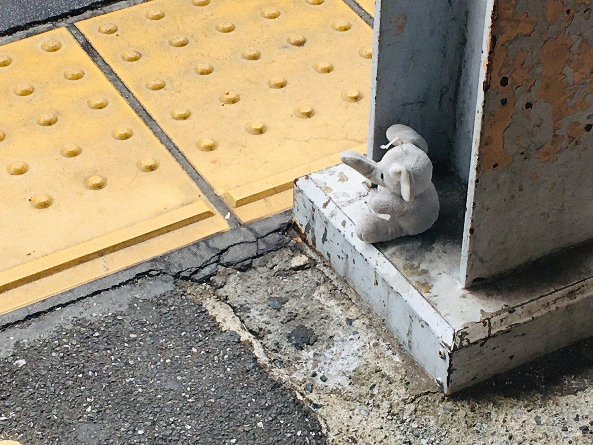 test ツイッターメディア - 明大前駅で待ってる子いますよ…  #ゾウ #ぬいぐるみ #落し物 #明大前   見つかりますよう… https://t.co/AlvP4XnM4B