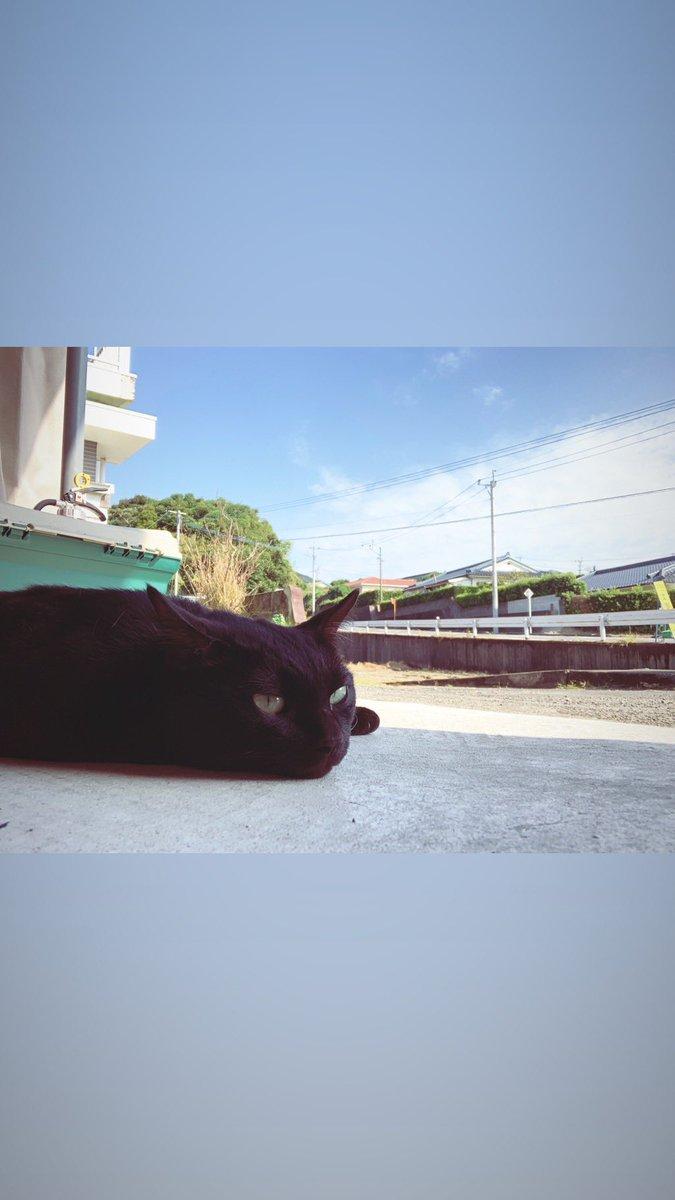 test ツイッターメディア - けーのまったりタイム かぎしっぽの黒猫  #BUMPOFCHICKEN   #黒猫 https://t.co/eQeGoql7Am