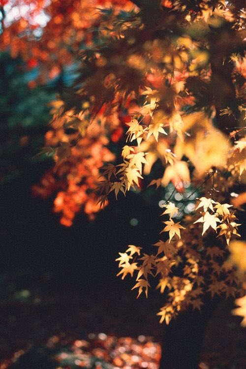 Melancholy persuasions that you hope don't get worse Ignoring monsters bearing pearls ameliorating verse Summoning strength from weakness putting magic on the line Tossing it all to the Autumn wind, searching for a sign.  #vss365 #vsspoem #MicroStory https://t.co/uOqjZE002A