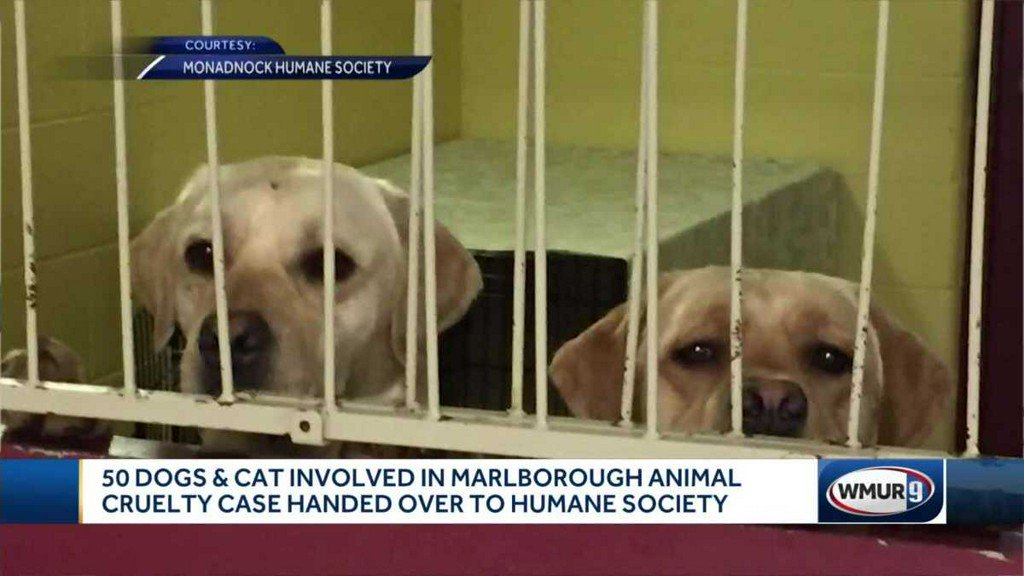 test Twitter Media - 50 dogs, 1 cat involved in Marlborough animal cruelty case surrendered to humane society https://t.co/6oaG6U6Dwu https://t.co/6Sq8WQVmyp