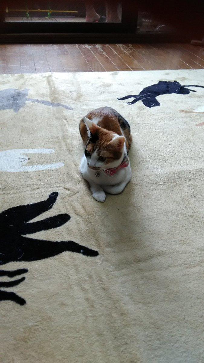 test ツイッターメディア - 本日(火曜日)猫娘お休みです!  明日は水曜日ですが、ぺぺちゃんです。  明後日の木曜日は、カナキチになりそうです。  よろしくお願いします🍺🍺🍺  写真はラスボス感が出てる小豆ちゃん。 https://t.co/1qdL80faft